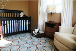 Contemporary Baby Boy Nursery Pictures