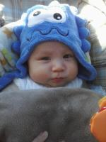 Darwin wearing a blue monster hat ready for a walk