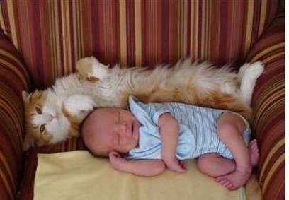 newborn baby baby sleeping next to a cat on its back.jpg