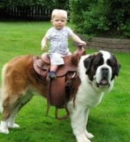Bernard dog as horse.JPG