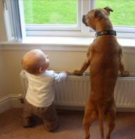 Dog and baby standing at the window.JPG