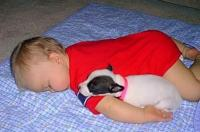 Funny baby and dog sleeping faces down.JPG