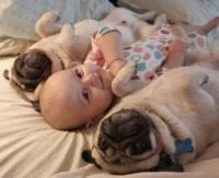 Funny baby with dogs.JPG
