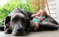 Funny dog and baby sleeping.JPG