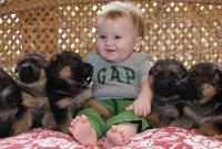 German Shepherd Puppy picture.JPG