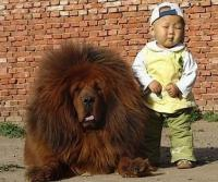 Large puffy dog with little boy.JPG