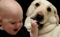 Baby and dog funny picture of cute baby grapping on dog's lips.JPG