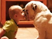 Funny cute baby and dog photo of baby kissing dog.JPG