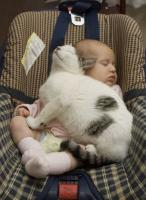 Baby car funny picture of baby and cat napping together in a seat.JPG