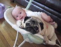 Baby funny picure with cute baby in baby bouncer with small dog.JPG