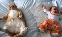 Fat cat funny picture with baby.JPG