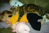 Best friends little girl and cat napping.JPG
