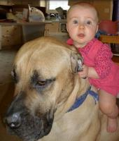 Super funny and cute baby rides on big dog