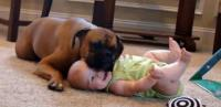 Cute dog and baby picture with funny dog puts its head on baby girl face.JPG