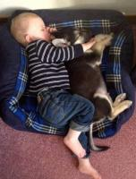 Baby boy sleeping in dog with his dog friend and they both in deep sleep.JPG