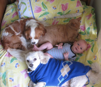 Baby boy sleeping in group with pets two dogs and a cat in baby crib.PNG