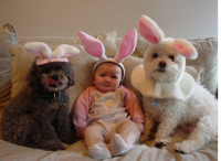 Funny photo of a baby and two dogs dressed in rabit customes.PNG