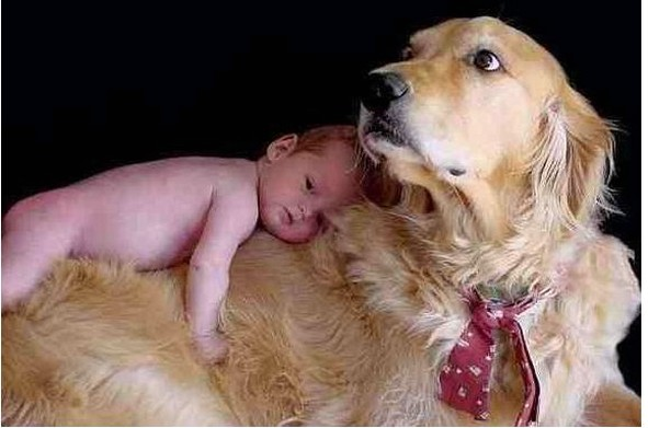 cute baby sleeping on big dog.jpg