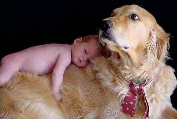 BEBÉS ,  LOS MÁS  SIMPATICOS .......¡ pa´comerseloss  !! - Página 5 Cute+baby+sleeping+on+big+dog